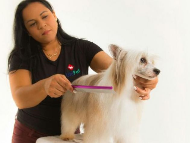 Curso Esteticista Pet